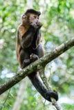 Affe, der im Dschungel sitzt Stockfoto