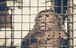 Affe, der im Käfig traurig sich fühlt Lizenzfreie Stockfotos