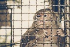 Affe, der im Käfig traurig sich fühlt Stockbilder