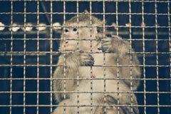 Affe, der im Käfig traurig sich fühlt Stockbild