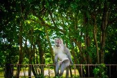Affe, der im Park aufwirft Stockfoto