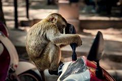 Affe, der im Spiegel schaut Stockfotos