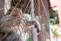 Affe, der im Tempel von Thailand schläft Lizenzfreies Stockfoto