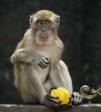 Affe, der indisches traditionelles Gebäck hält Lizenzfreies Stockbild