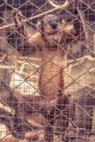 Affe, der innerhalb des Käfigs hängt Lizenzfreies Stockfoto
