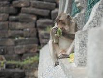 Affe, der Lebensmittel isst Stockfotos