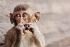 Affe, der Lebensmittel isst Lizenzfreie Stockfotos