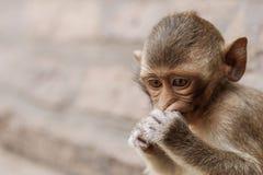 Affe, der Lebensmittel isst Stockfoto