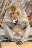 Affe, der Lebensmittel isst Lizenzfreie Stockbilder
