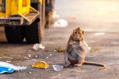 Affe, der Lebensmittel von der Plastiktasche isst Stockfotos