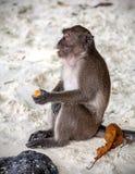 Affe, der mit Frucht auf einem Strand sitzt Stockbilder