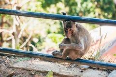 Affe, der mit Süßigkeit in seinem Mund sitzt Stockbilder