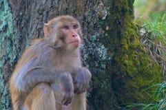 Affe, der nahe einem Baum in Indien sitzt Lizenzfreie Stockbilder