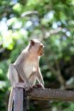 Affe in der Natur Stockfotos