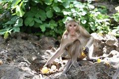 Affe in der Natur Lizenzfreie Stockbilder