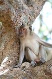 Affe in der Natur Stockbild