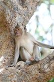 Affe in der Natur Lizenzfreies Stockbild