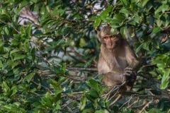 Affe in der Natur Lizenzfreie Stockfotografie