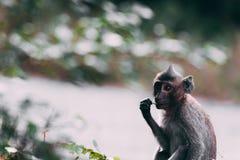 Affe in der Natur Stockfoto