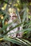Affe in der Natur Stockbilder