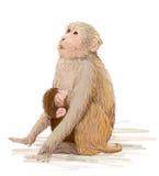 Affe, der neugeborenes Baby einzieht Lizenzfreie Stockbilder