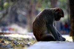 Affe, der in offenem sitzt Lizenzfreies Stockbild