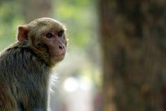Affe, der in offenem sitzt Stockfoto