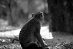 Affe, der in offenem sitzt Lizenzfreies Stockfoto