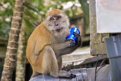 Affe, der Pepsi-Cola Getränk trinkt Stockfotos