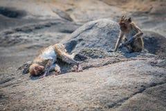 Affe, der playfully Kamera betrachtet Lizenzfreie Stockfotos