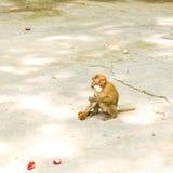 Affe, der Rambutan isst Lizenzfreie Stockfotografie