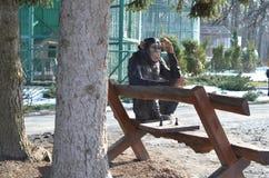 Affe, der Schach spielt Lizenzfreie Stockbilder