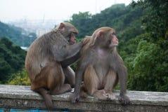 Affe, der sich dient Lizenzfreies Stockfoto