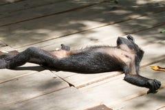Affe in der Sonne Lizenzfreies Stockbild
