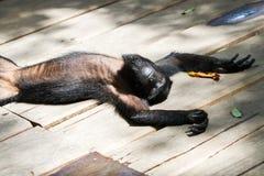 Affe in der Sonne Lizenzfreie Stockfotografie