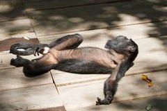 Affe in der Sonne Stockfotos