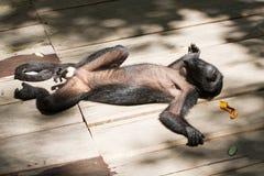 Affe in der Sonne Stockfotografie