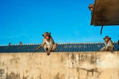 Affe in der Stadt Lizenzfreies Stockfoto