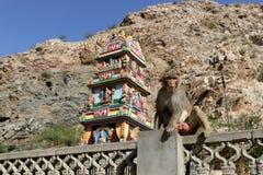 Affe in der Stadt von Jaipur Lizenzfreie Stockfotos