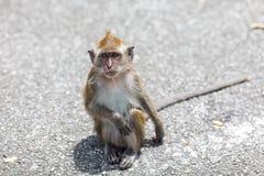 Affe in der Straße Lizenzfreie Stockfotos