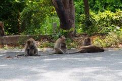 Affe, der Straße spielt Lizenzfreie Stockfotografie
