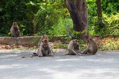 Affe, der Straße spielt Lizenzfreie Stockfotos