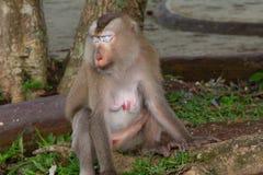 Affe, der unter dem Baum sitzt Lizenzfreie Stockfotos