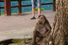 Affe, der unter dem Baum sitzt Stockfotos