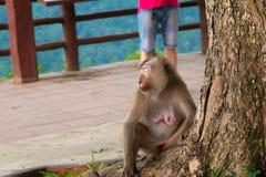 Affe, der unter dem Baum sitzt Stockfotografie