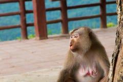 Affe, der unter dem Baum sitzt Lizenzfreie Stockbilder