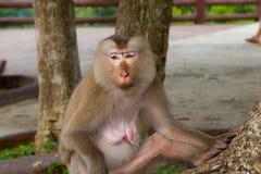 Affe, der unter dem Baum sitzt Stockfoto