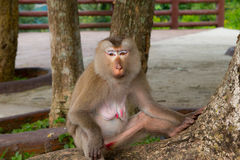 Affe, der unter dem Baum sitzt Lizenzfreie Stockfotografie