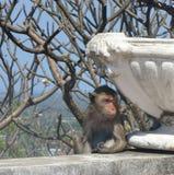 Affe, der unter großem Topf der weißen Blume sich versteckt Stockfotografie