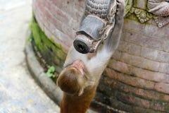 Affe, der von einem allgemeinen Brunnen trinkt Swayambunath-Tempel Stockfotos